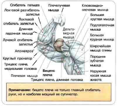 Методы тренировок в