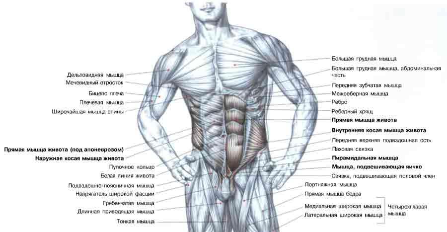 ...упражнения для пресса, в частности для прямых мышц живота, должны непременно выполняться с округленной поясницей.