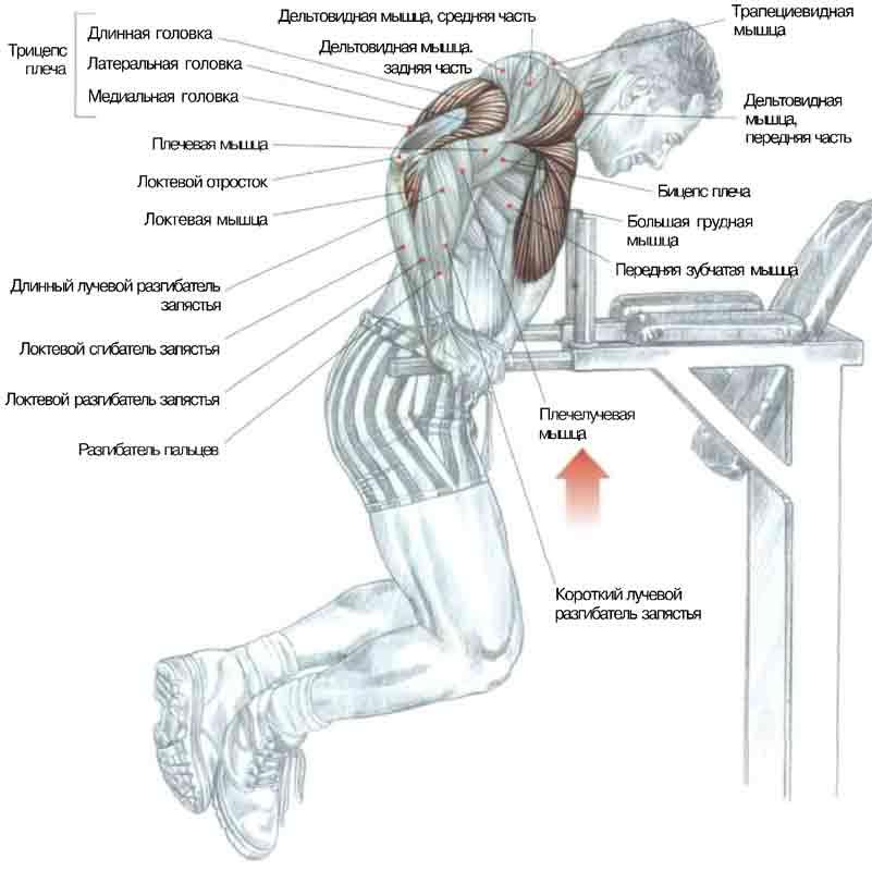 упражнения на турнике для передних зубчатых мышц