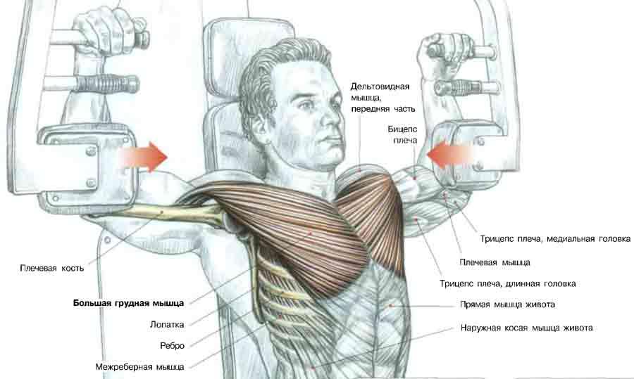 И так как правильно качать мышцы груди. . Упражнение отжимания на брусьях