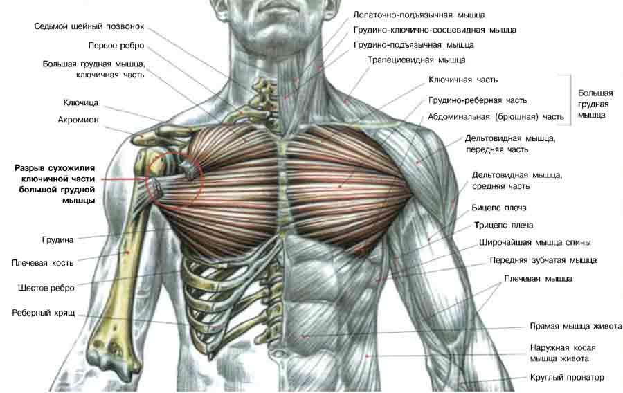 Увеличение груди с с помощью физических упражнений