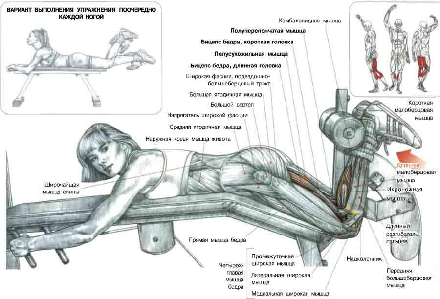 Сгибание ног в тренажёре.  Если я тебя правильно понял, то вот этот тренажёр прорабатывает именно эту мышцу.
