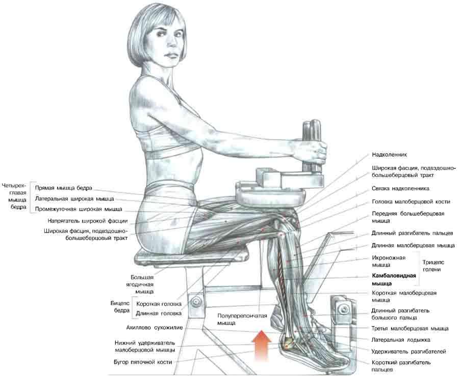 упражнения для голени похудения