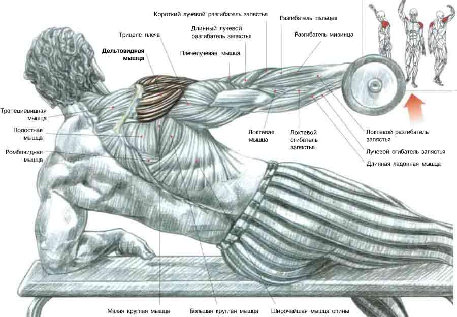 Делается упражнение в негатив-акцентированном стиле: вверх снаряд поднимается как угодно, - (согнутой рукой, а...