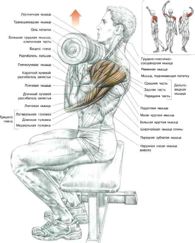Упражнения попеременный жим гантелей