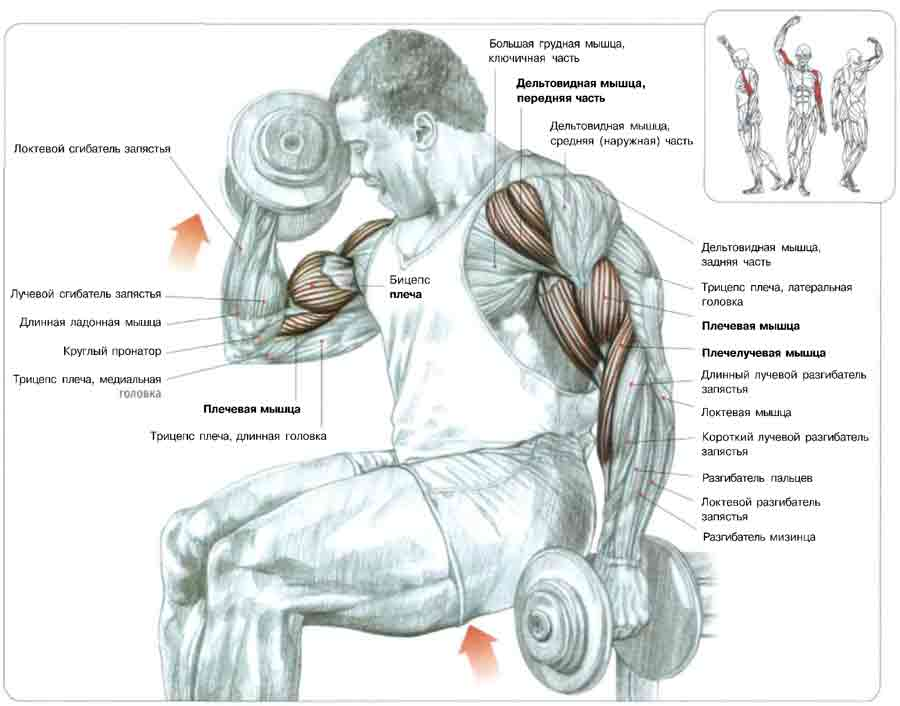 биомеханики это упражнение