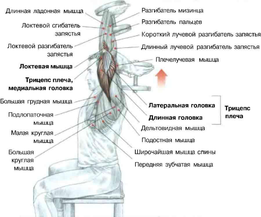 Упражнения на трицепс гантелями - Как накачать мышцы дома Трицепсы - Упражнения с гантелями для мужчин Трицепс дома.