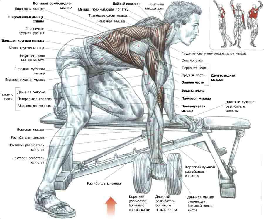 Прокачать мышцы спины в домашних условиях 761