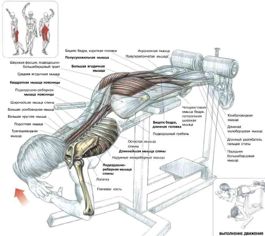 Как правильно качать спину.  Мышцы поясницы.