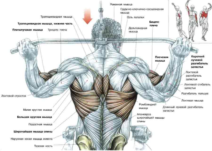 Это упражнение позволяет выполнять те же подтягивания, но с нагрузкой, меньшей веса вашего тела.