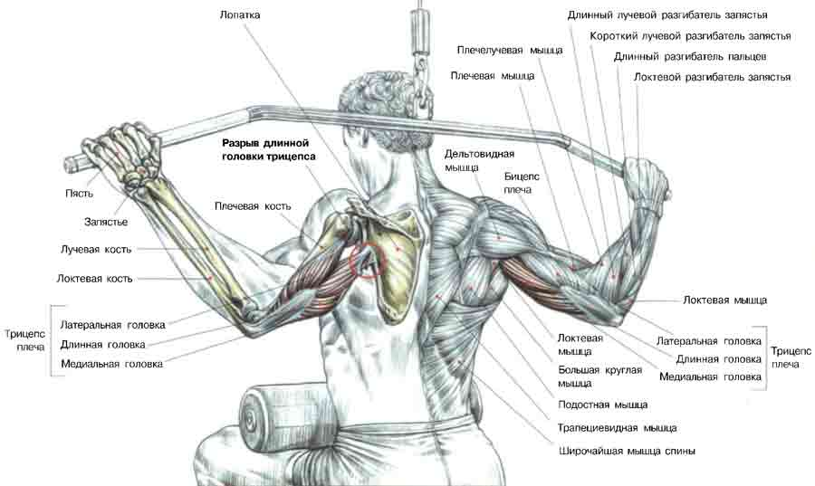 Как быстро нарастить мышцы в домашних условиях