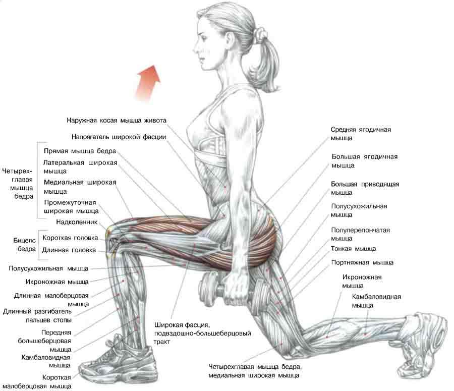 как убрать жир с икроножной мышцы