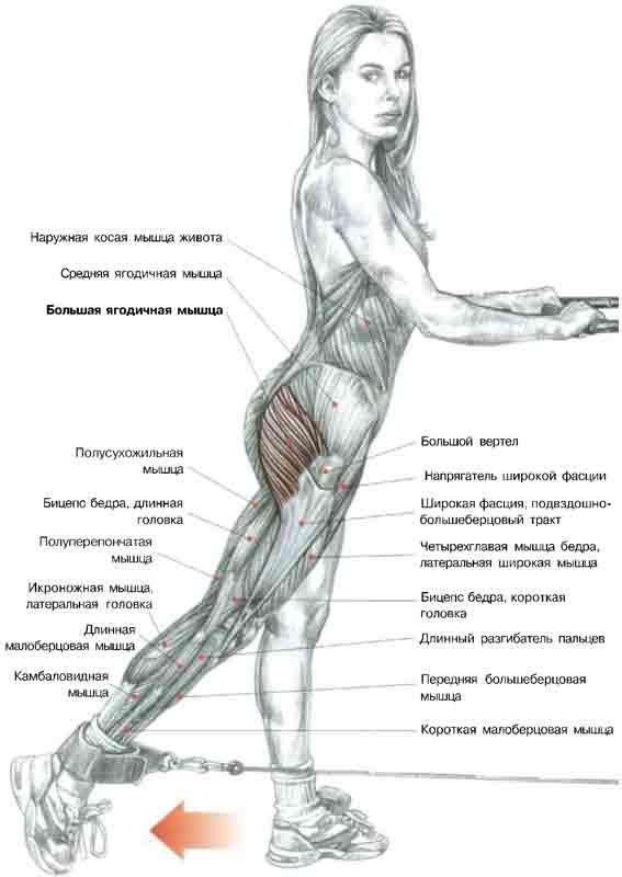 программа тренировок для похудения ног дома