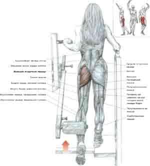 упражнение с валиком под спину отзывы похудевших