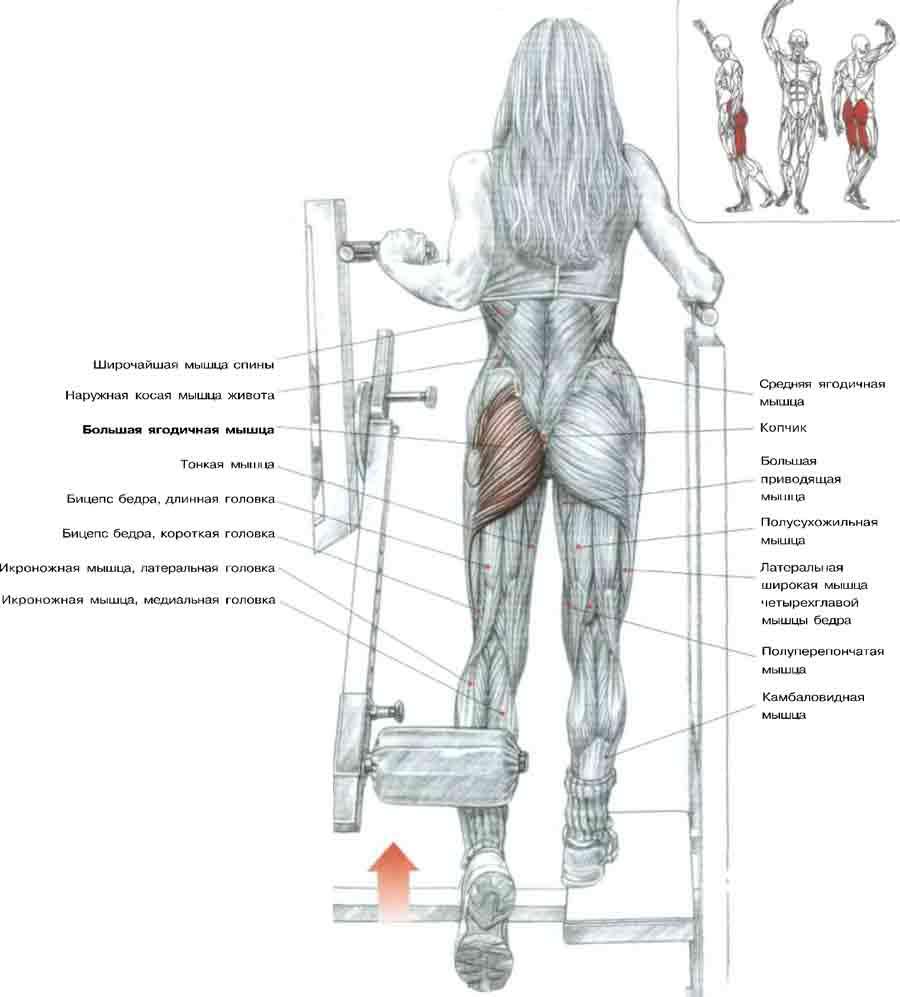 схема тренажеров для ног